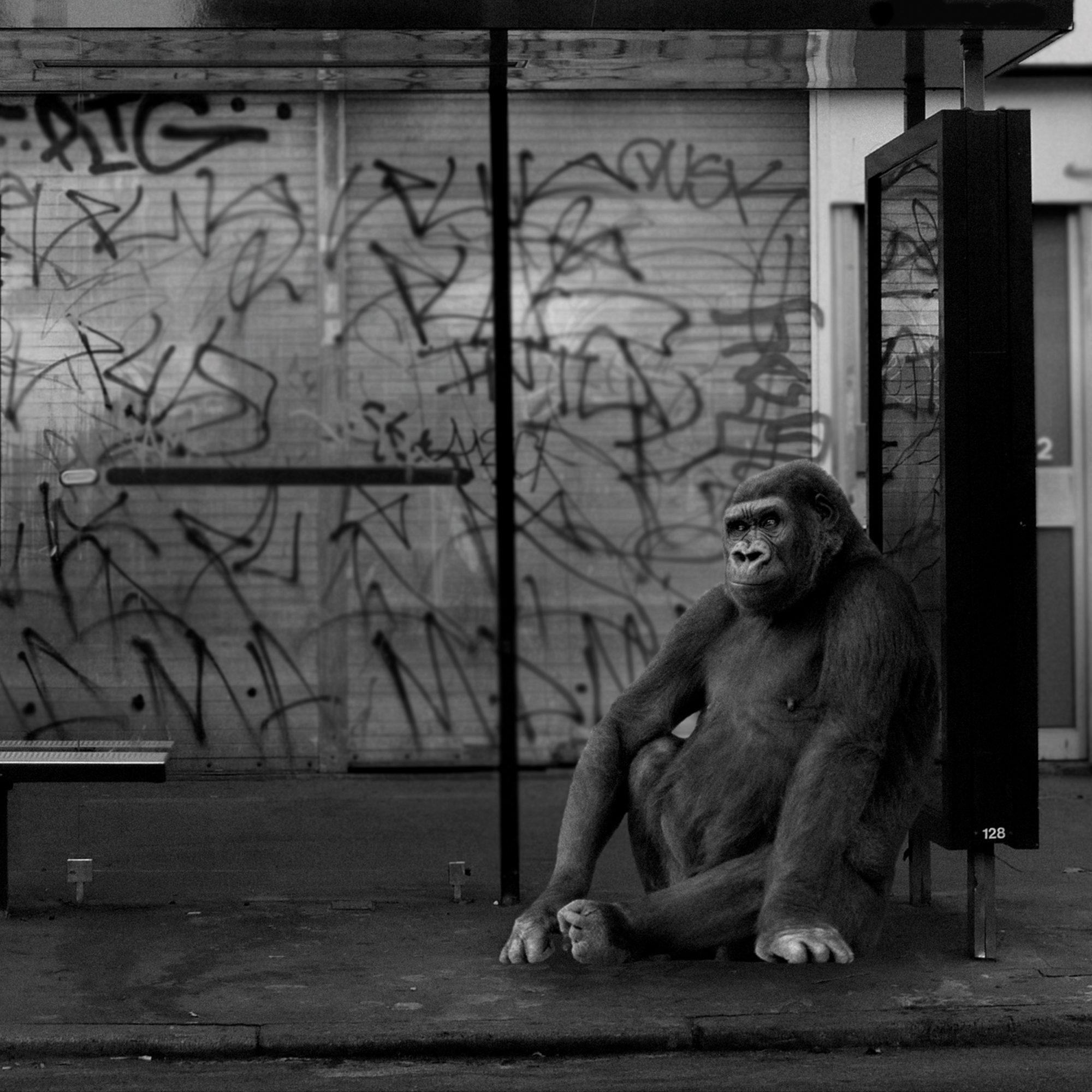 Close-up of a black and white photoshopped photography art print featuring a gorilla sat at a bus stop waiting for a bus in East London